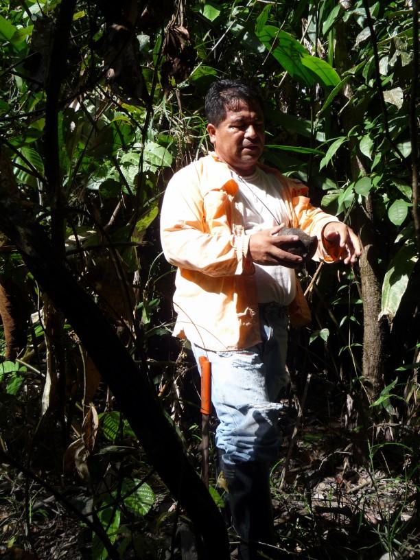 Magno egy kókusz-szerű termést hámoz machetejével