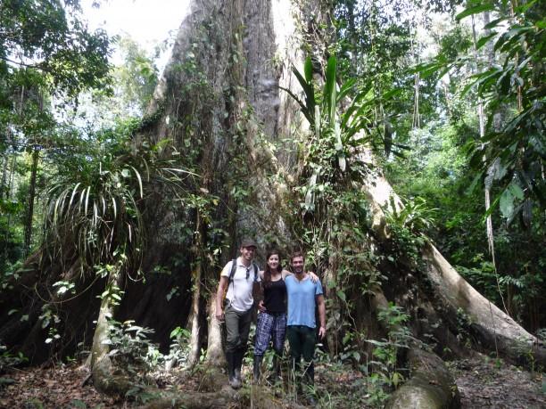 Ez a fa állítólag kb. 1000 éves
