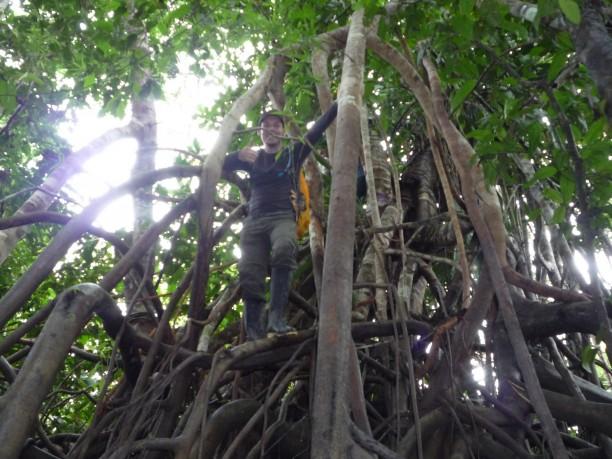 Fel a fára
